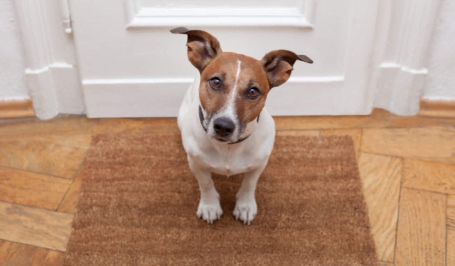 16 common mistakes people make when moving with pets – and how to avoid  them | Pocock & Shaw Estate Agents